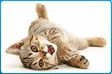veterinar-na-dom-kastracija-kotow