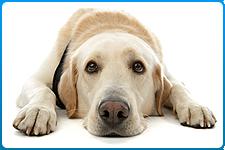 veterinar-na-dom-kastracija-sobak