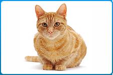 veterinar-na-dom-sterilizacija-koshek