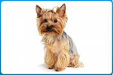 veterinar-na-dom-sterilizacija-sobak