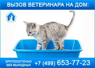 кошка не может сходить в туалет
