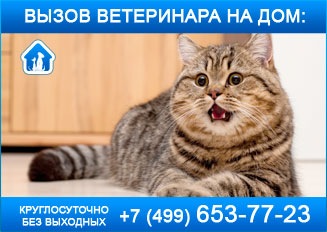 вздутие живота у кошки